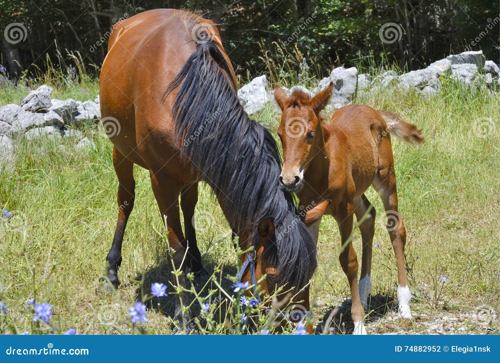Bruin paard met zijn veulen
