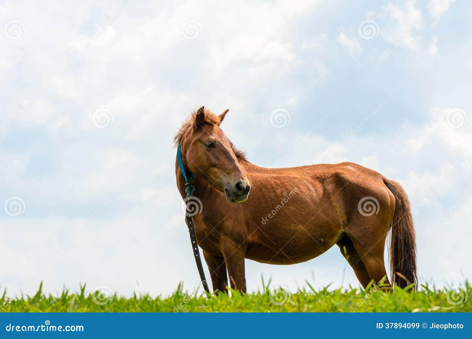 Bruin paard op weiland.