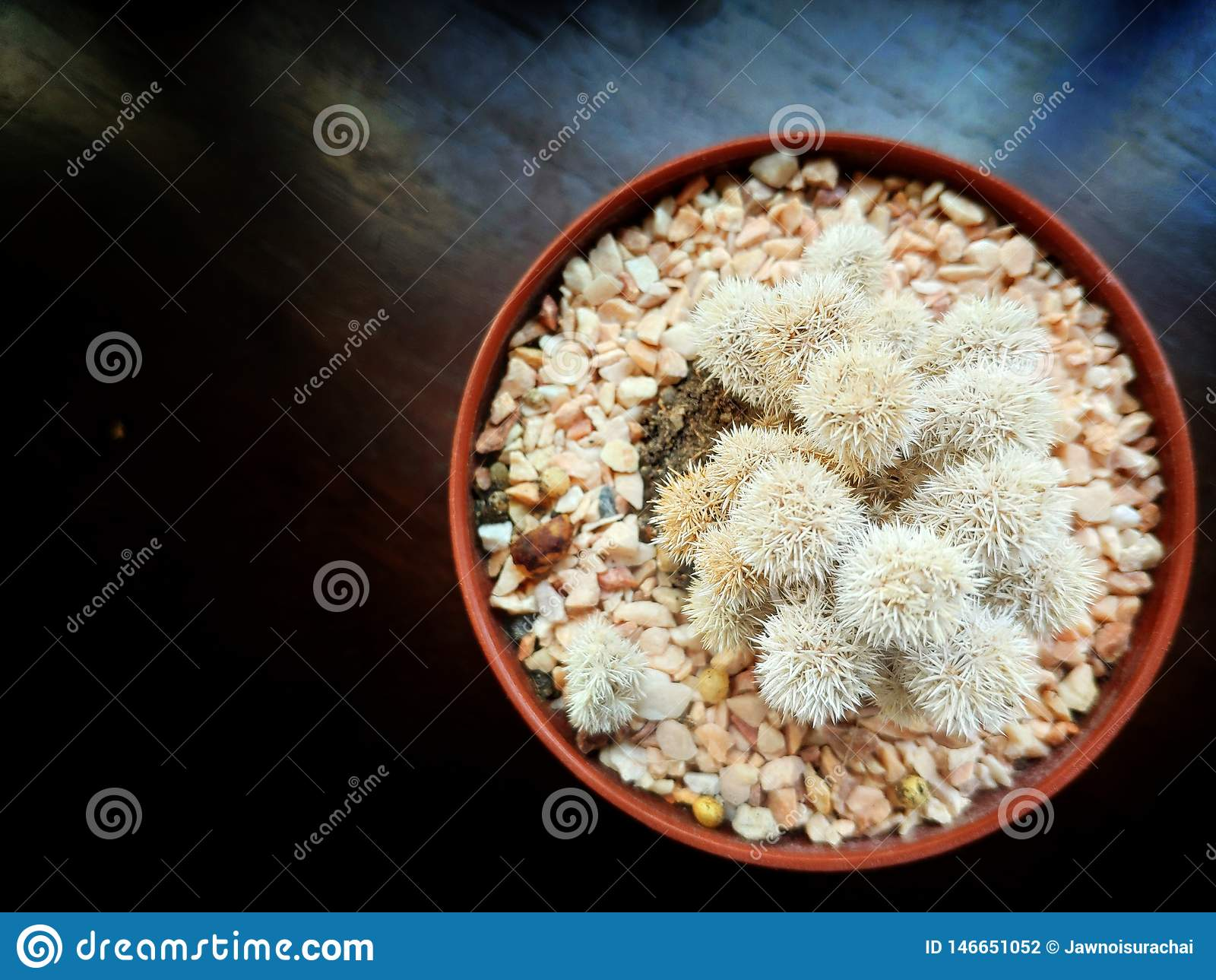 Bruine cactuspot op de donkere houten lijst