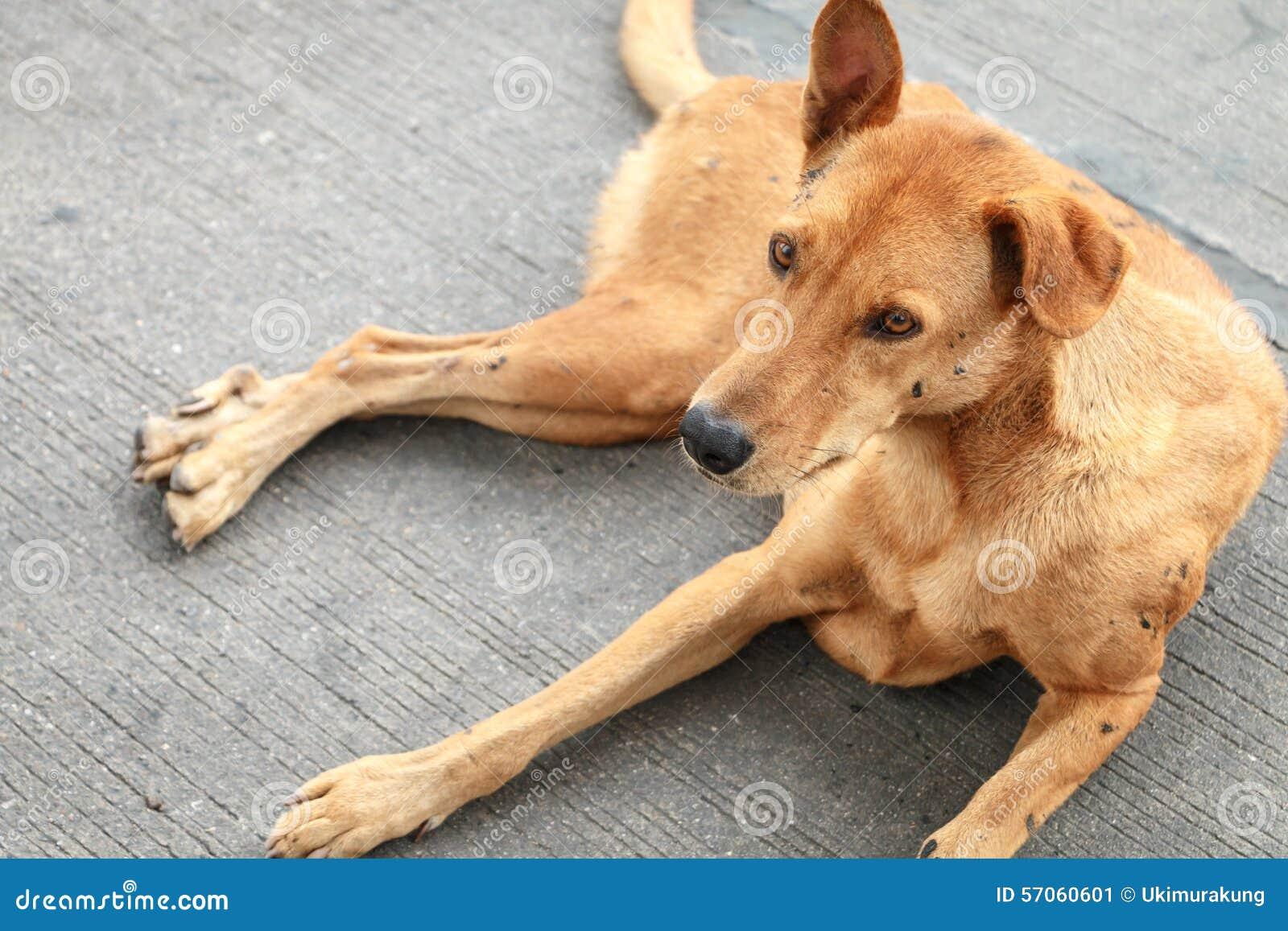 Bruine dakloze Thaise hond op de straat