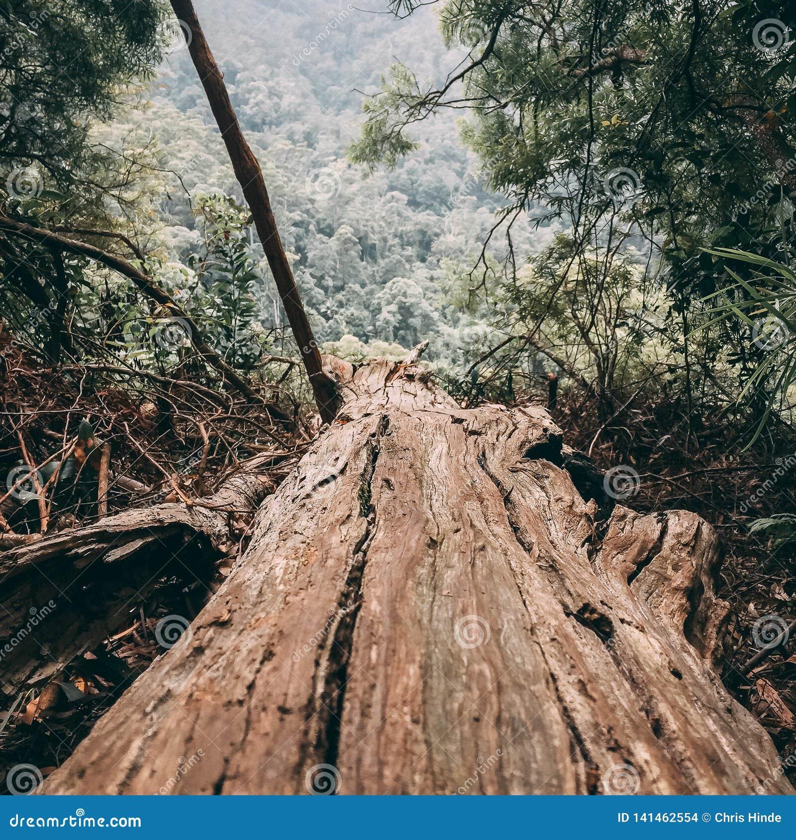 Bruine gevallen boom