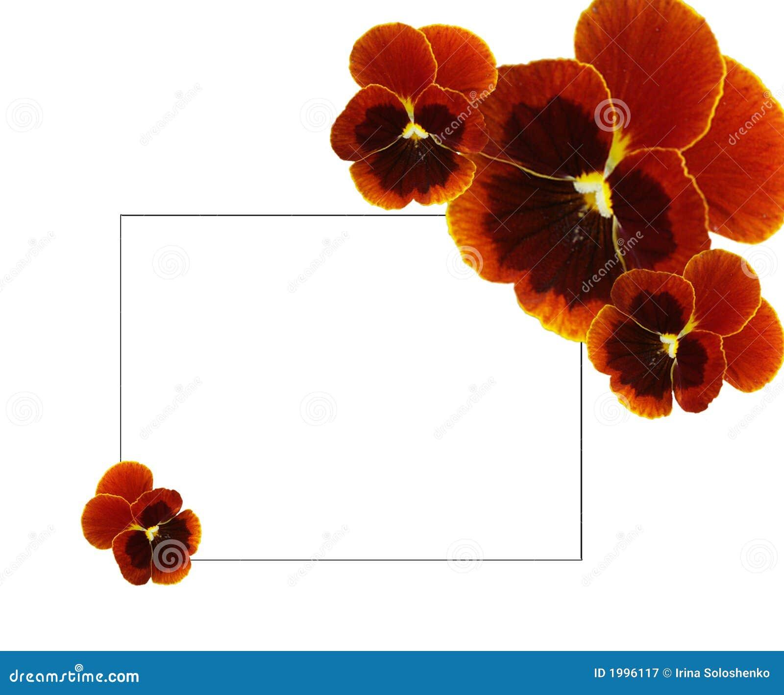 Bruine pansies