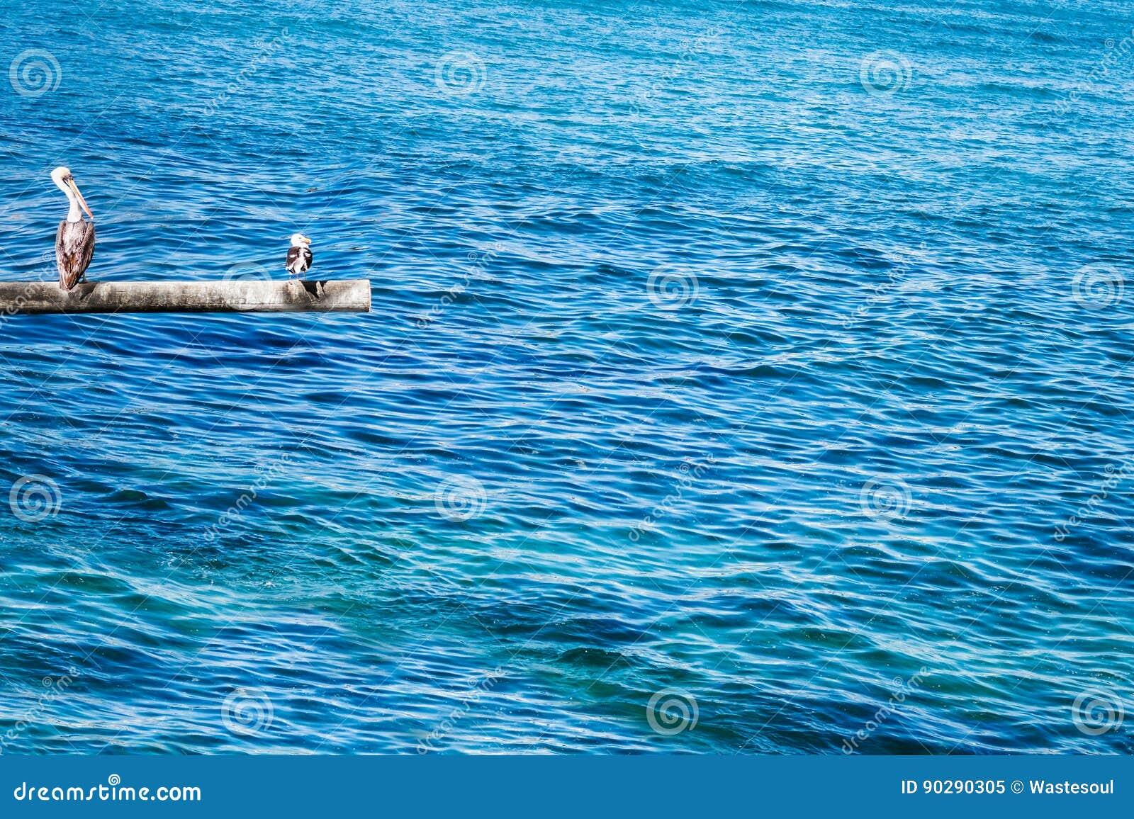 Bruine pelikaan en zeemeeuw op de pool