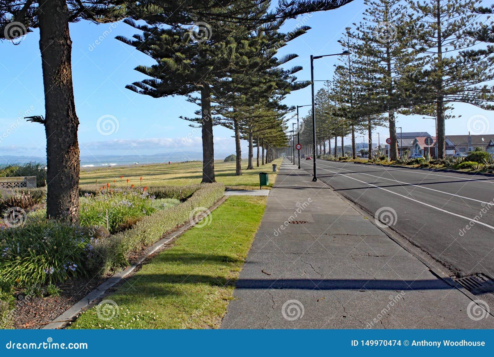 Bruk wykładał z conifer drzewami plażą w Napier, Nowa Zelandia
