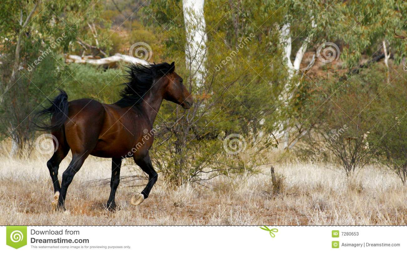 Brumby/caballo salvaje