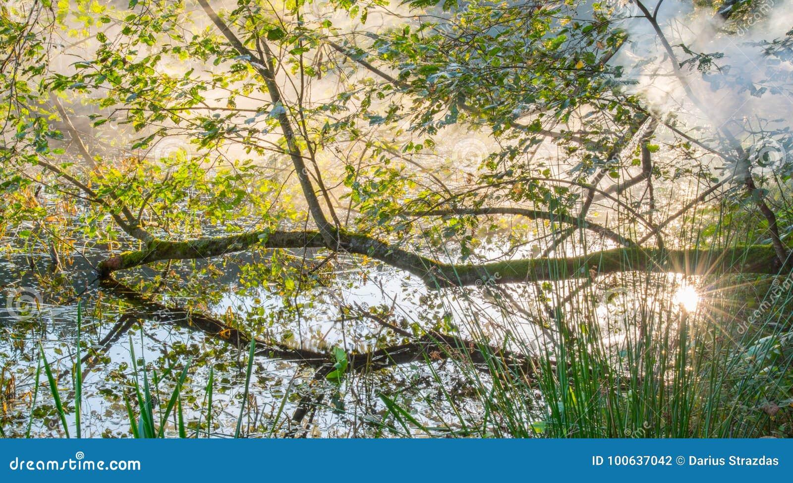 Brume dans l aube scénique de nature