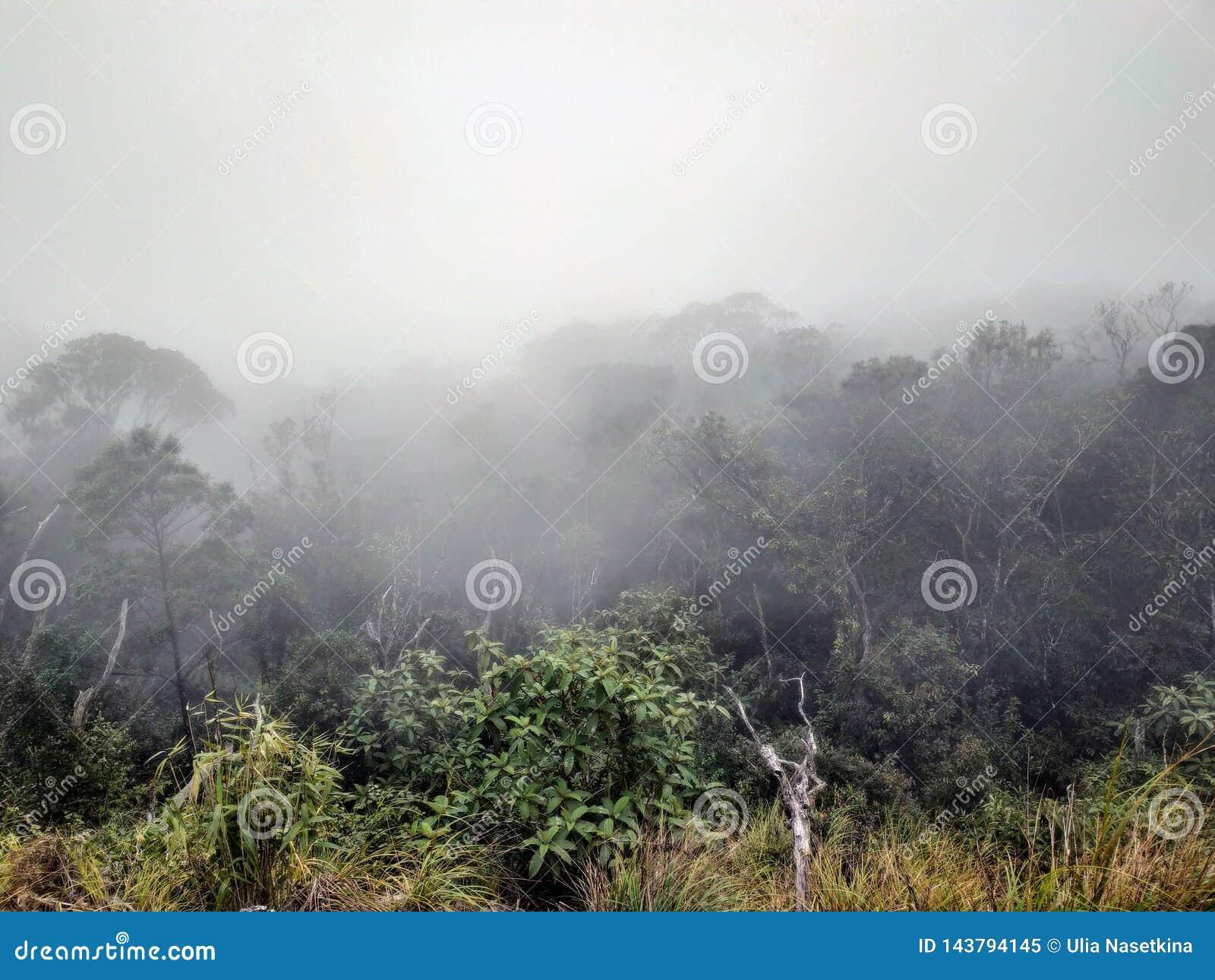 Brume foncée dans le brouillard de forêt dans les montagnes et une silhouette solitaire loin