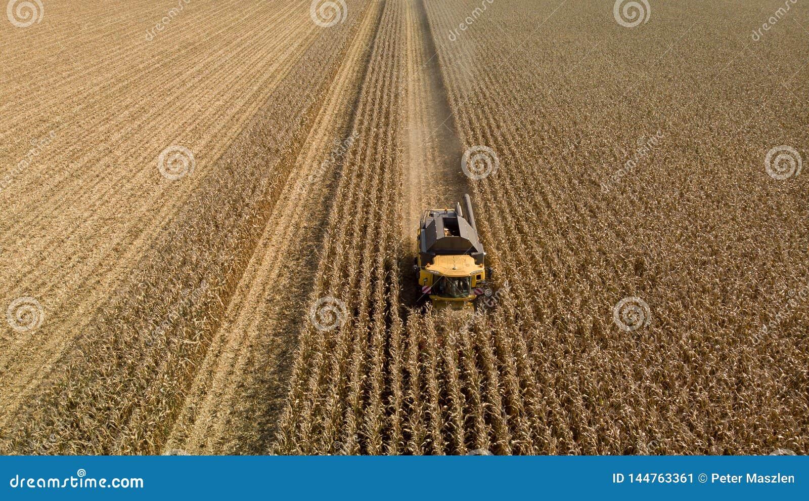 Brummenansicht des mähenden Maisfeldes der Erntemaschine