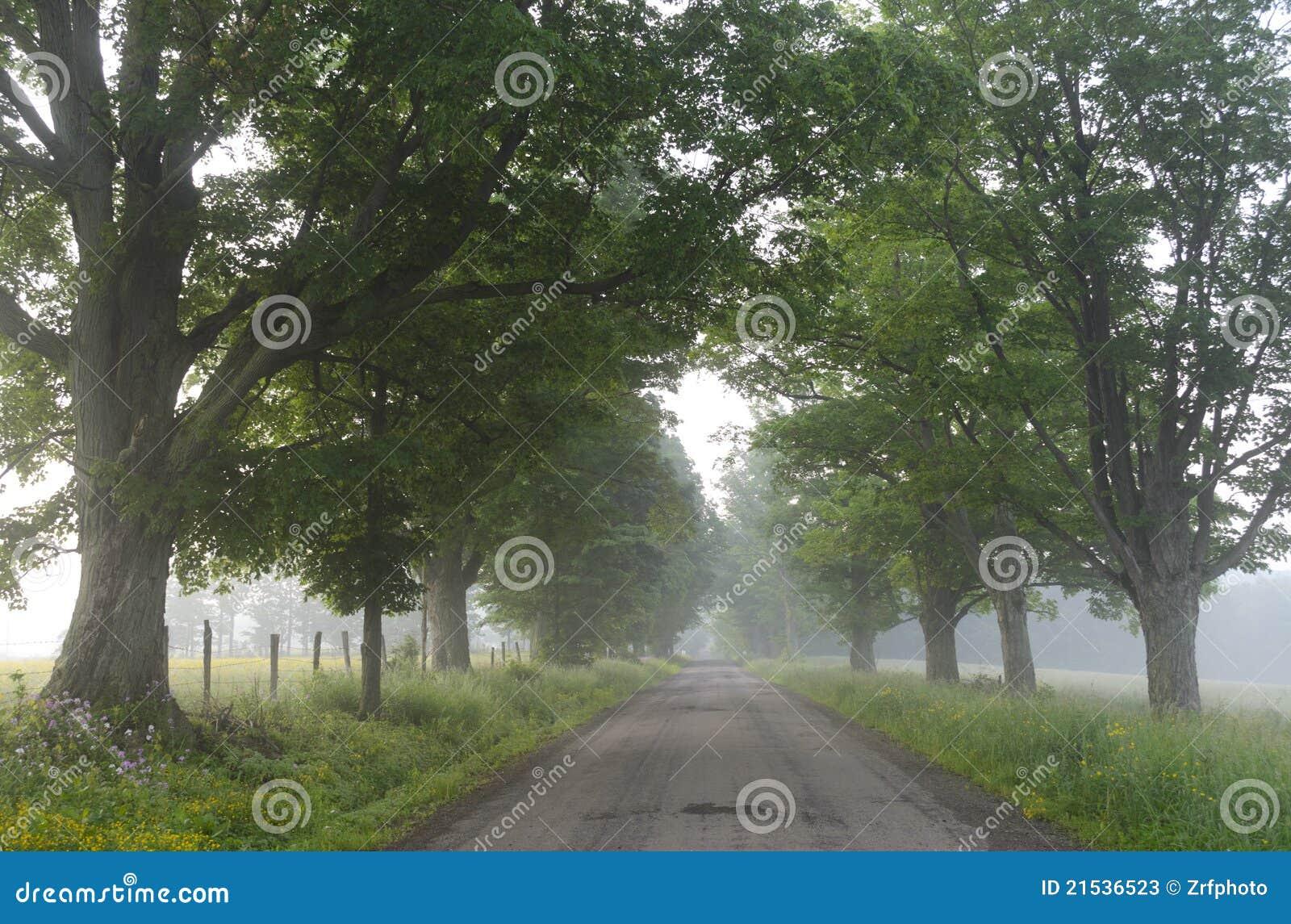 Brumoso, el árbol alineó el camino