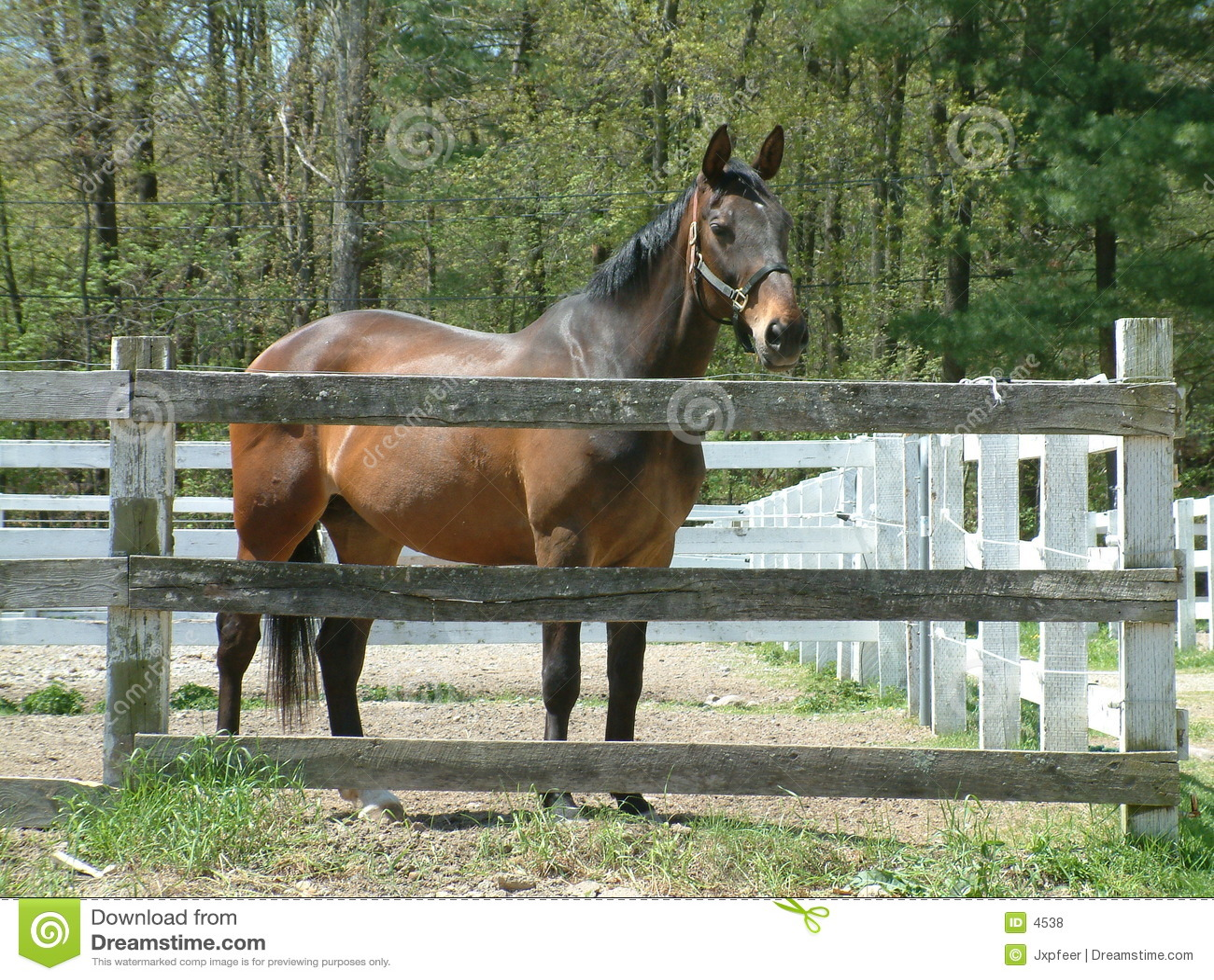 Brun häststable