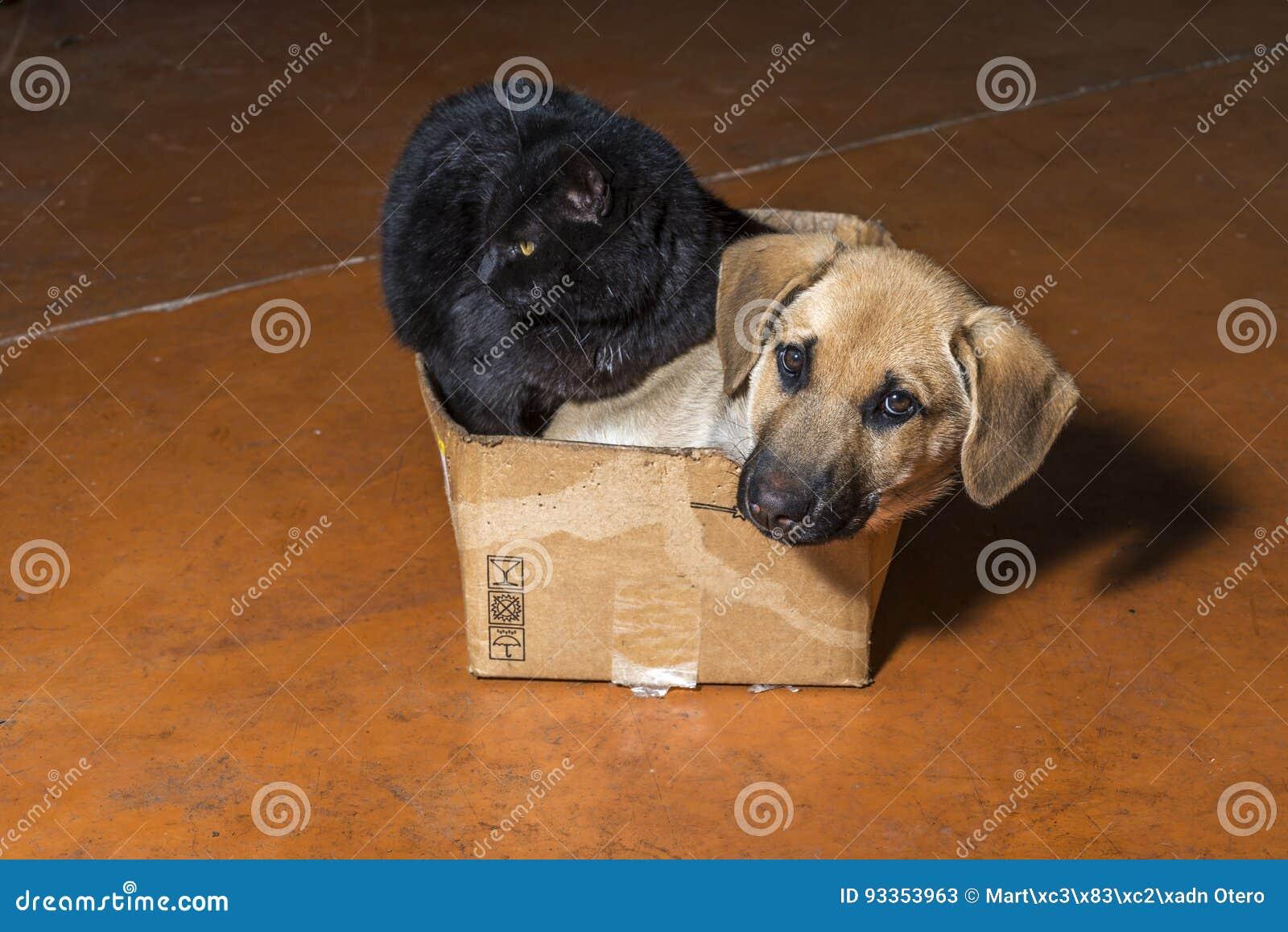 Brun hund och svart katt