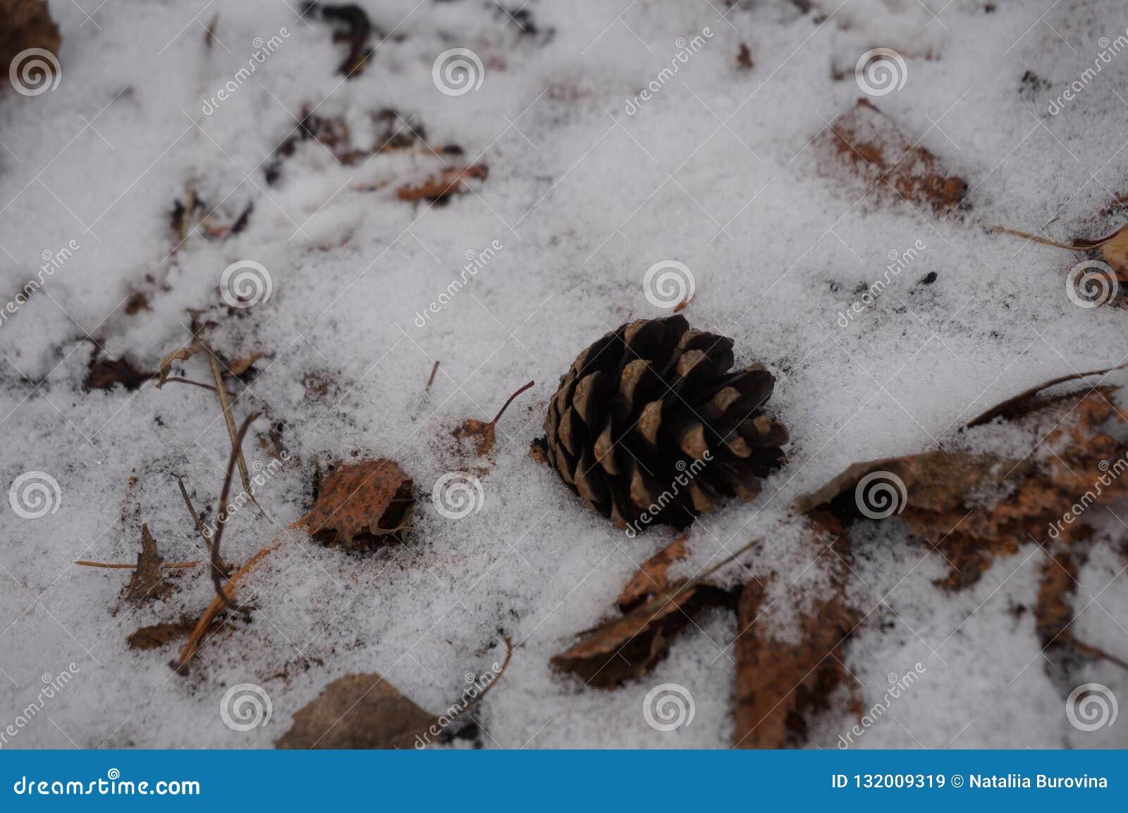 Brun kotte som ligger i snön