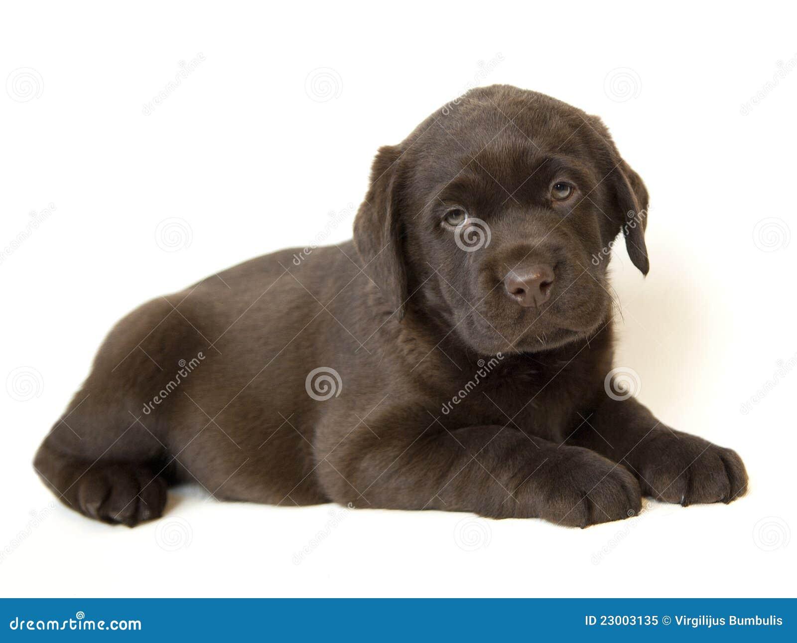 hund pris