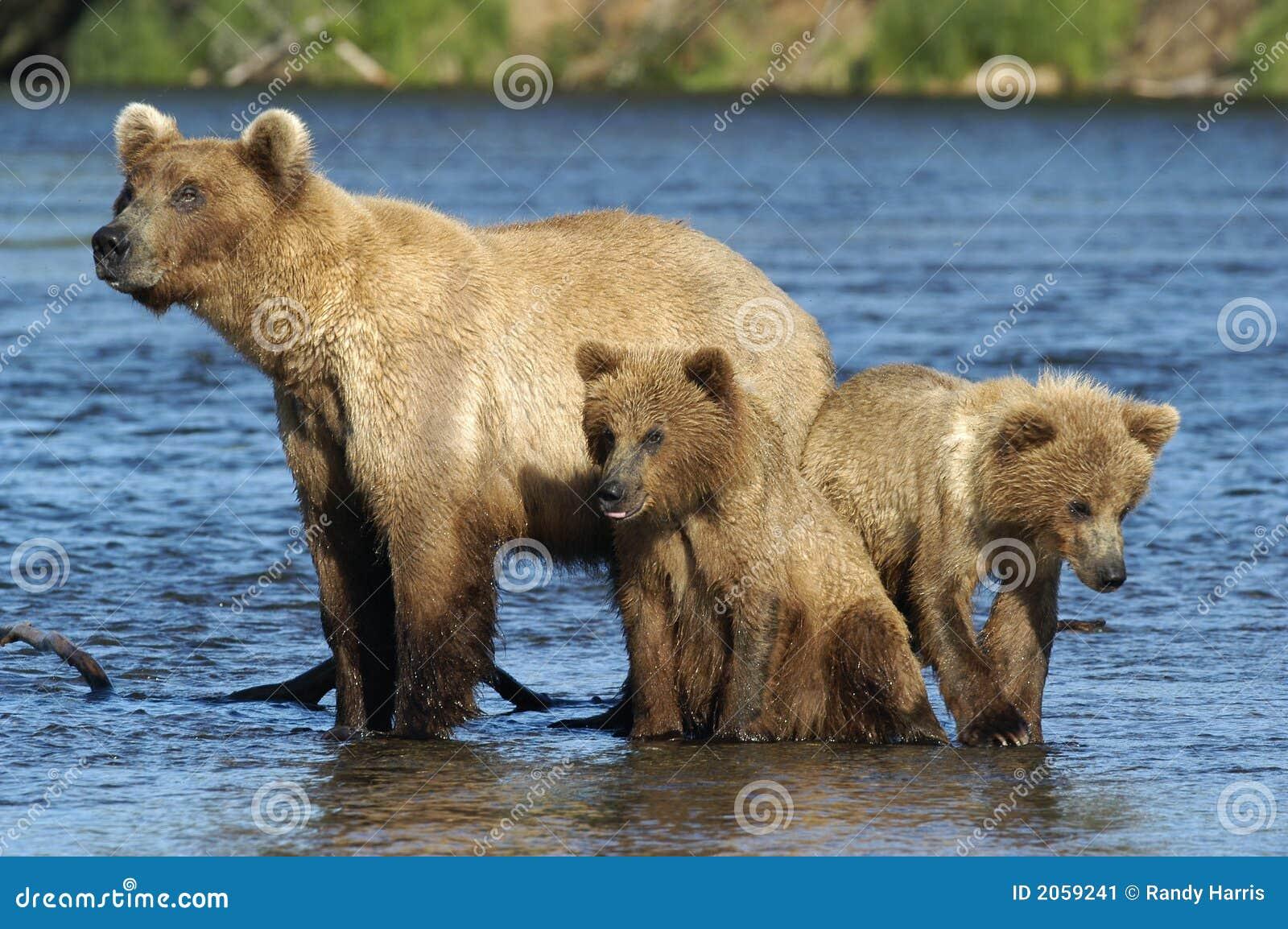 Bruna gröngölingar för björn henne sugga två