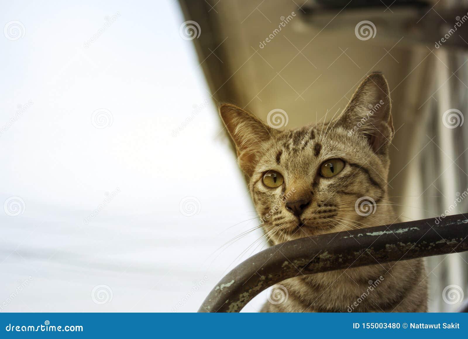 Bruna randiga katter spelar i olika gester