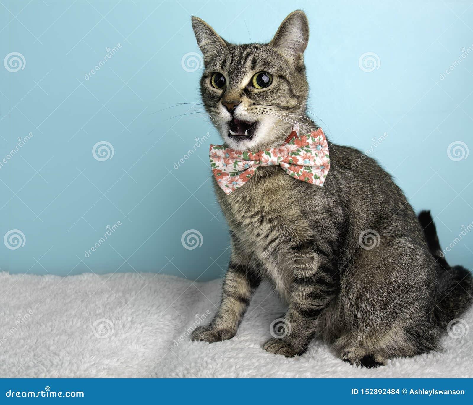 Bruna Tabby Cat Portrait, i studio och att bära en fluga
