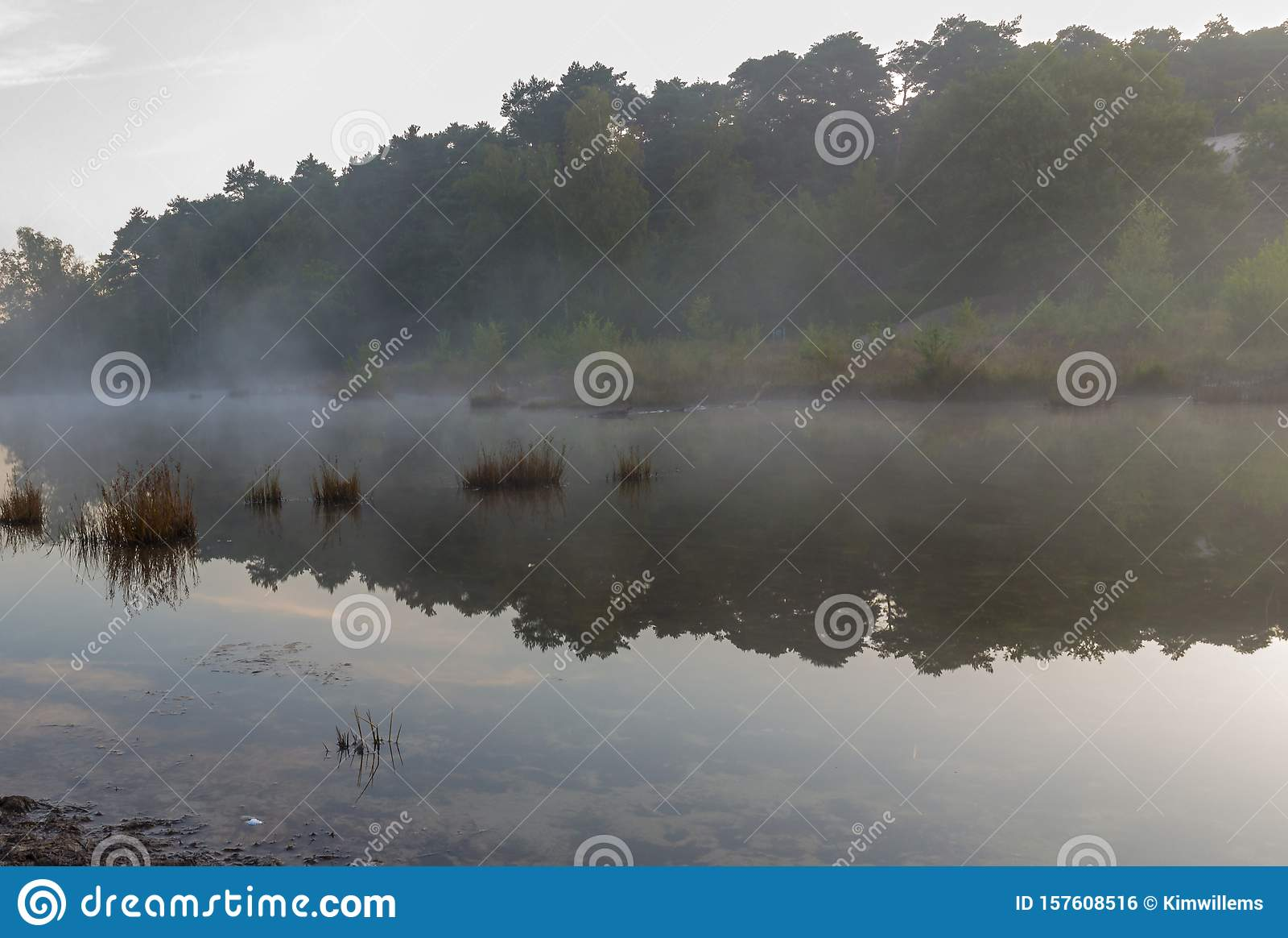 Brunsummerheide a national park in South Limburg ith morning fog over the swamp during sunrise