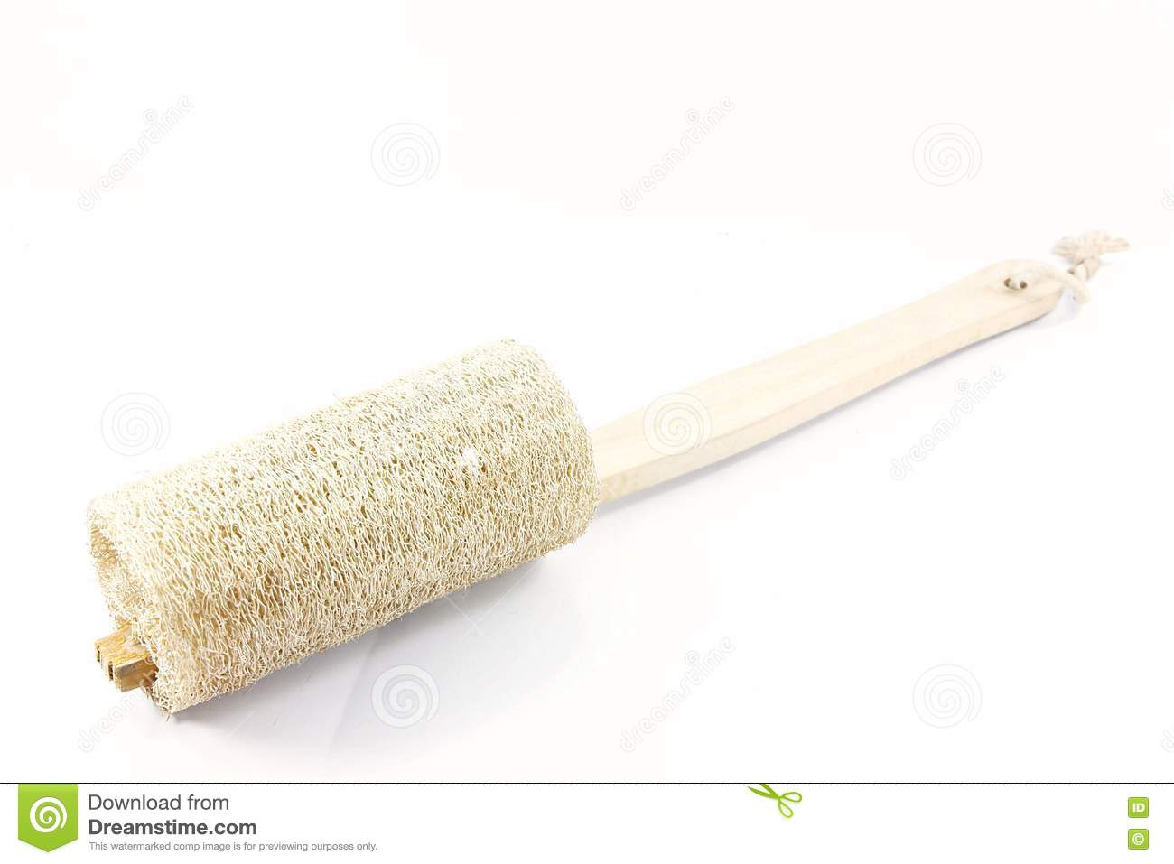 Brush Luffa Royalty Free Stock Photography Image 20049247