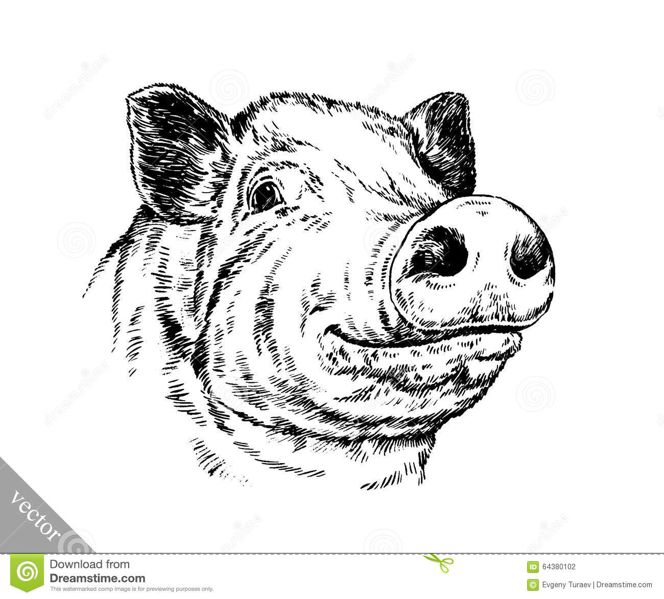 Line Drawing Of A Pig Face : Brush painting ink draw pig illustration stock vector