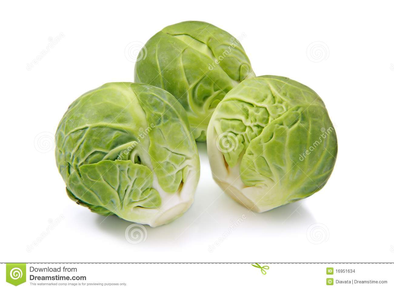 Brussels Sprouts Isolated On A White Background Stock Watermelon Wallpaper Rainbow Find Free HD for Desktop [freshlhys.tk]