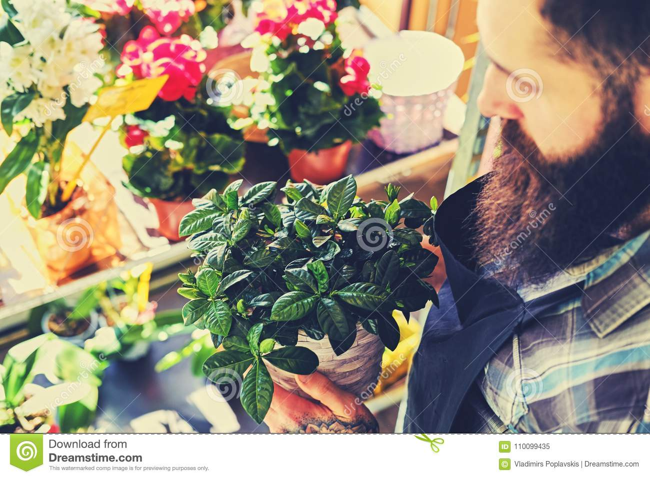 Brutal bearded flower seller with tattoos on his arms in a flowe