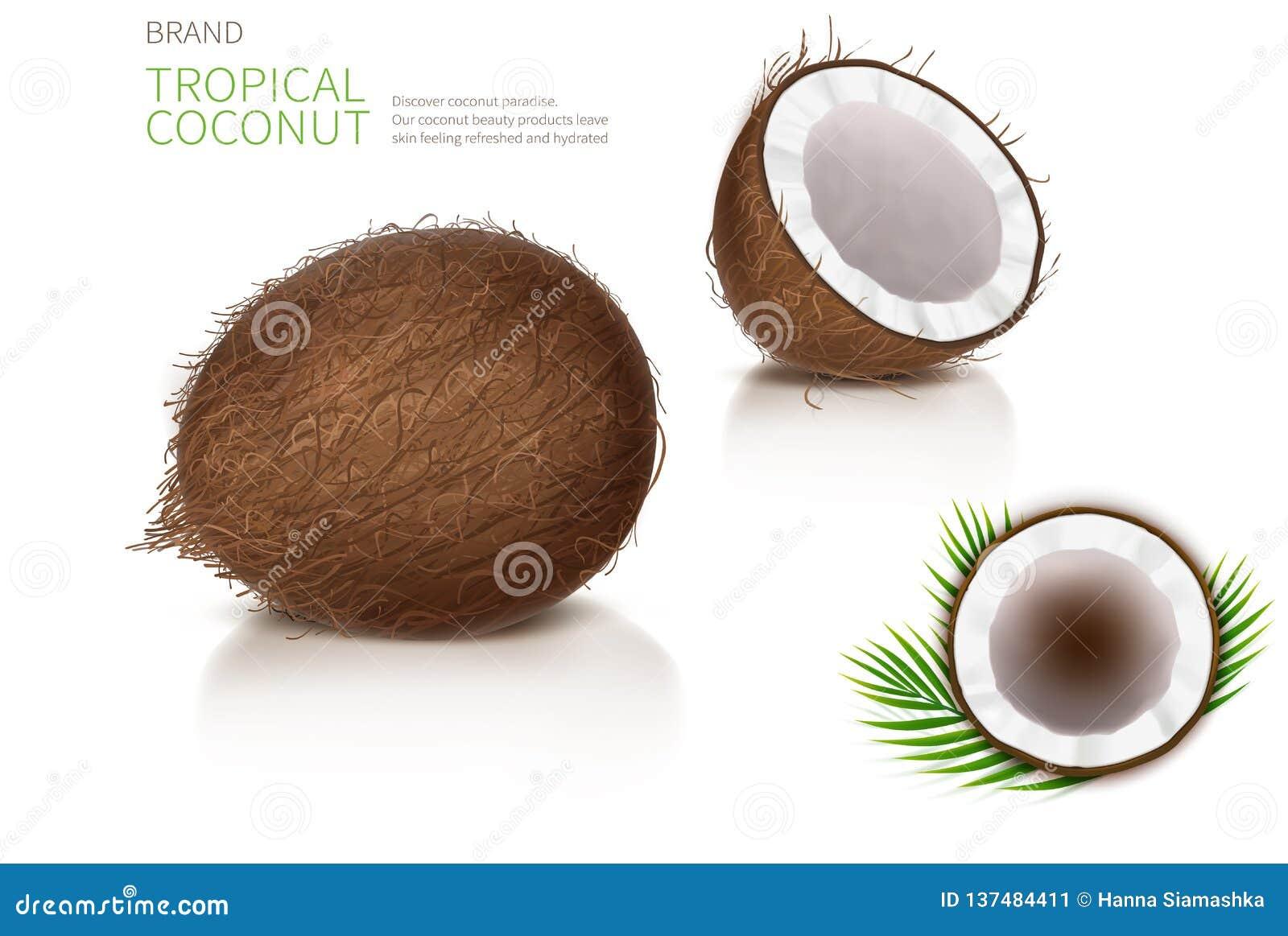 Bruten och hel kokosnöt