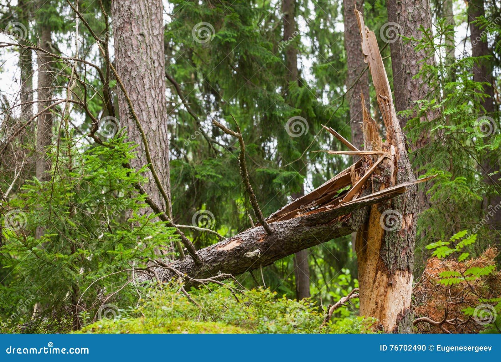 Brutet prydligt träd i skog