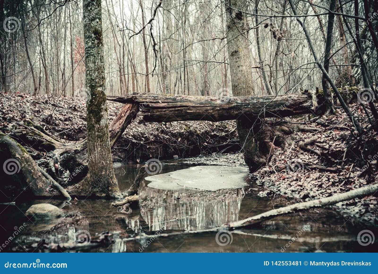 Brutet träd ovanför den lilla skogfloden En fred av is som svävar i vattnet