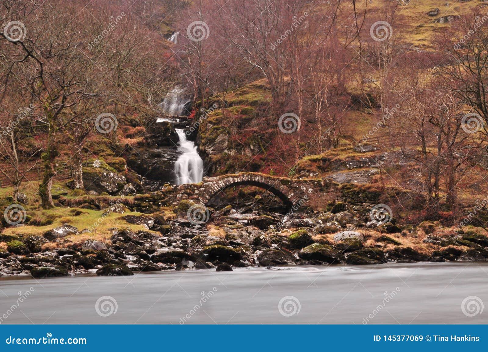 Bruyère de Cairngorms étouffant le plancher de forêt