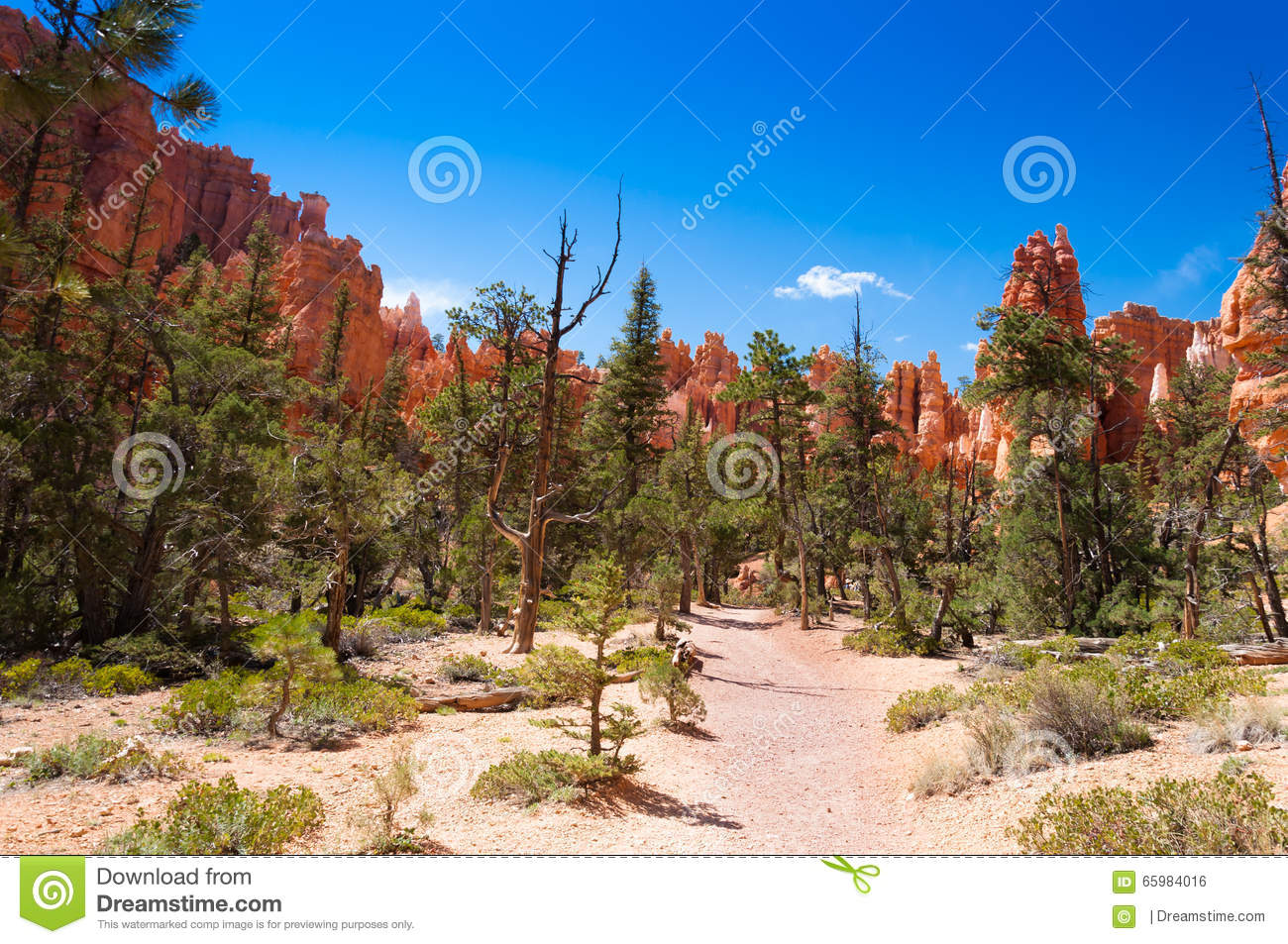Bryce Canyon National Par United States  City pictures : The Bryce Canyon National Park, Utah, United States.
