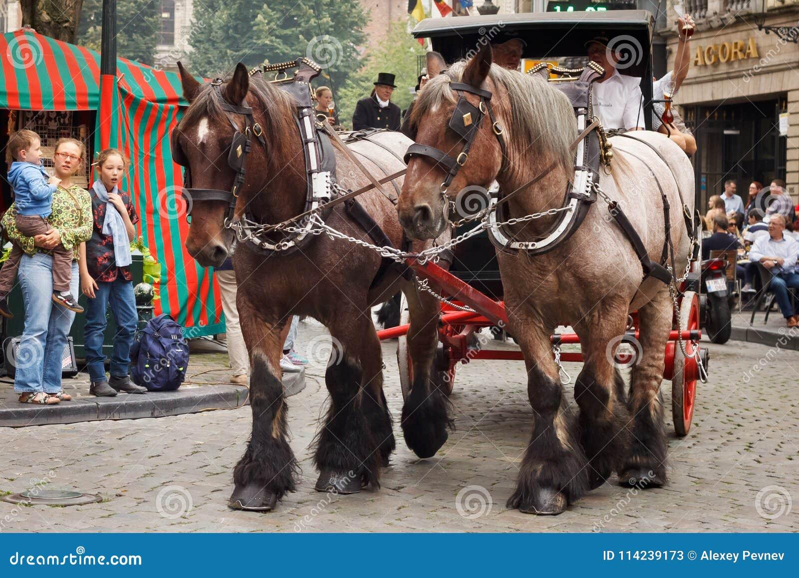 BRYSSEL BELGIEN - SEPTEMBER 06, 2014: Presentation av det Bosteels bryggeriet med hästvagnen