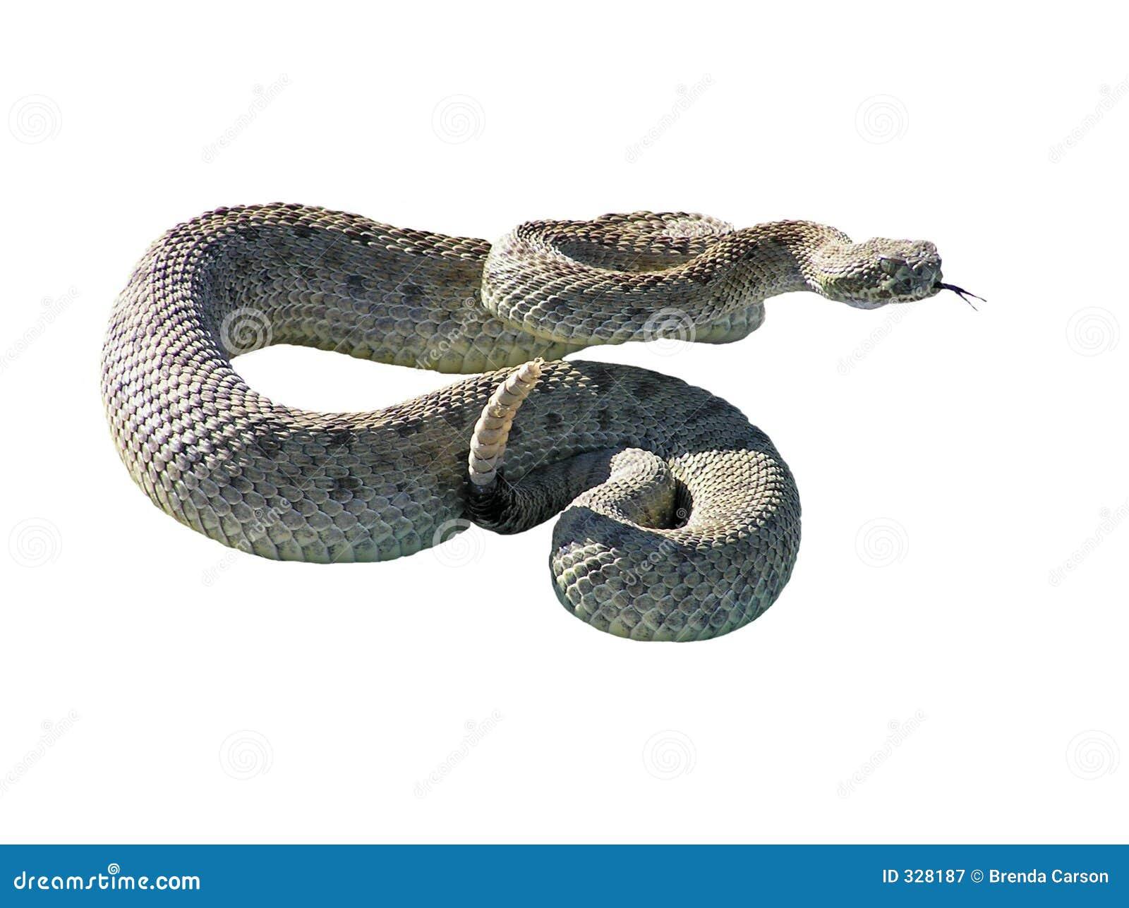 Brzęku wąż