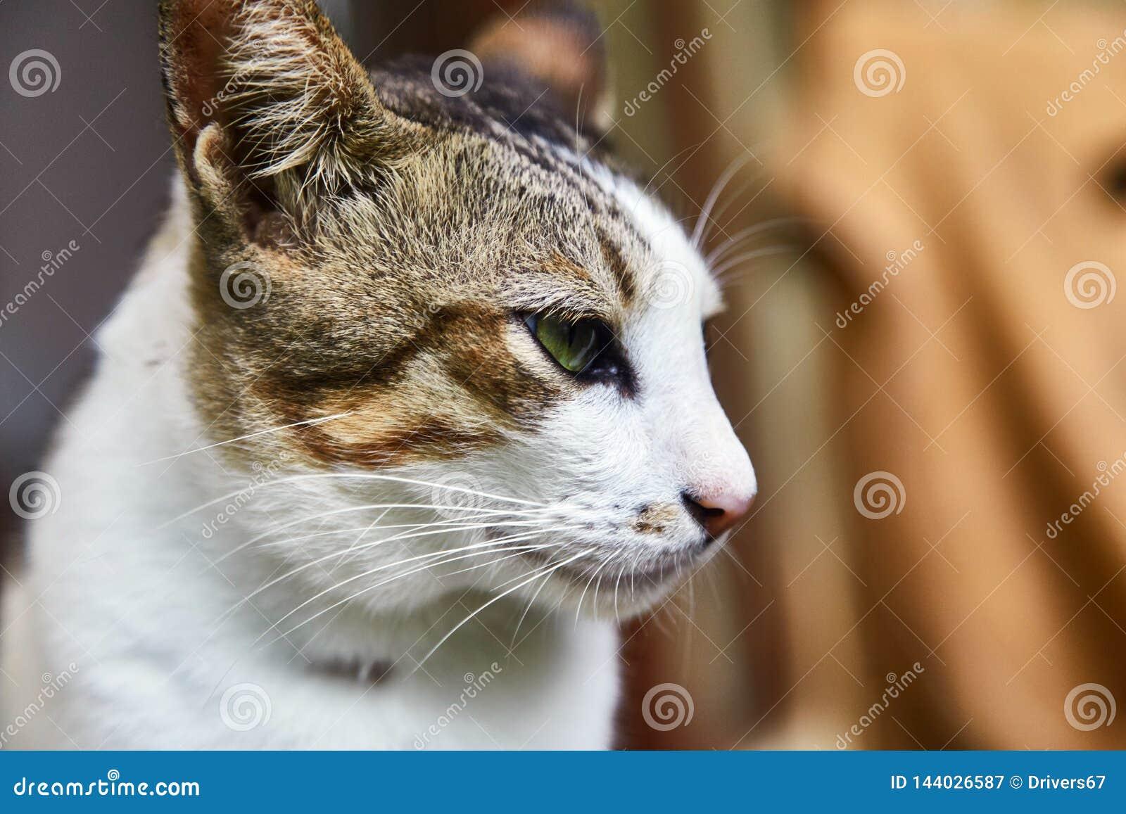 Brzmienie indonezyjczyka kot pet Zakończenie