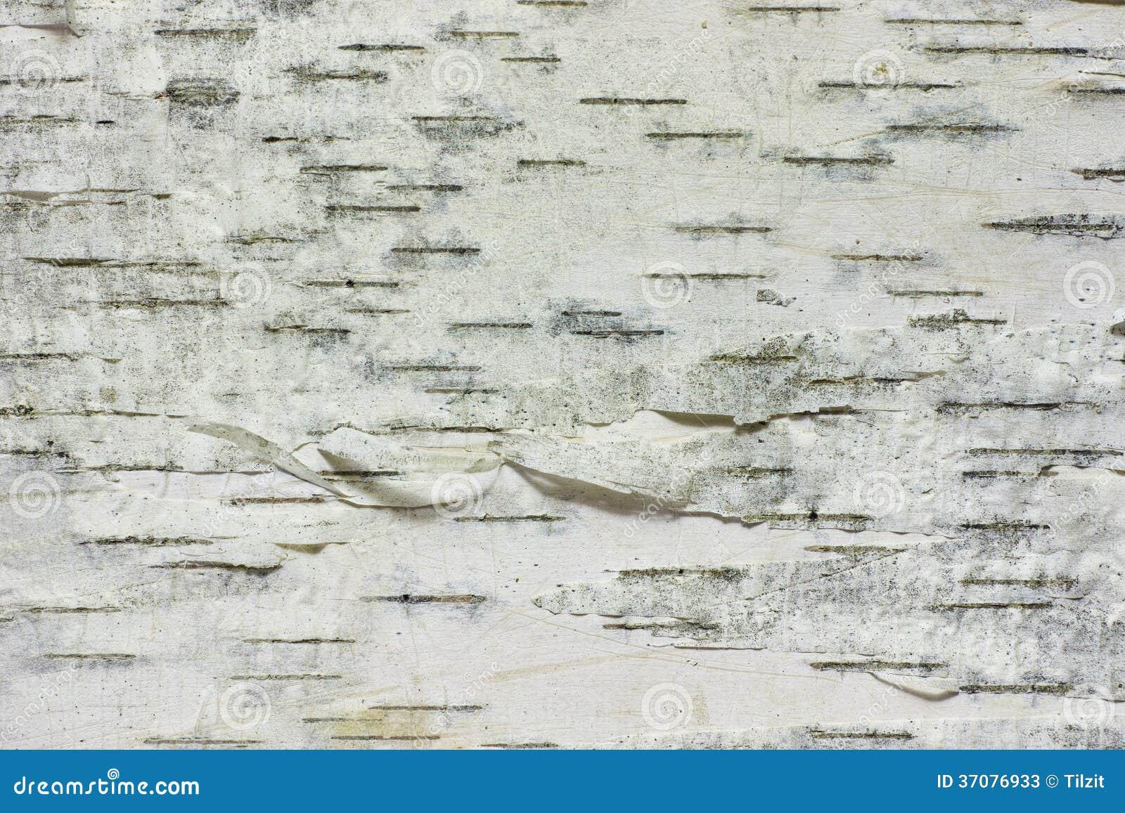 Download Brzozy barkentyna obraz stock. Obraz złożonej z sheik - 37076933