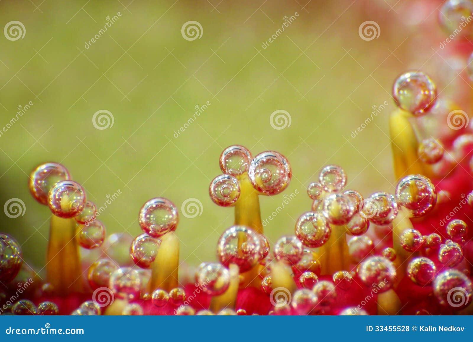Bubbles on a flower