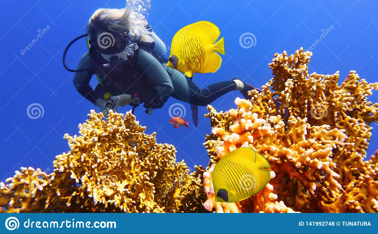 Buceador de la mujer y pares de pescados coralinos amarillos hermosos