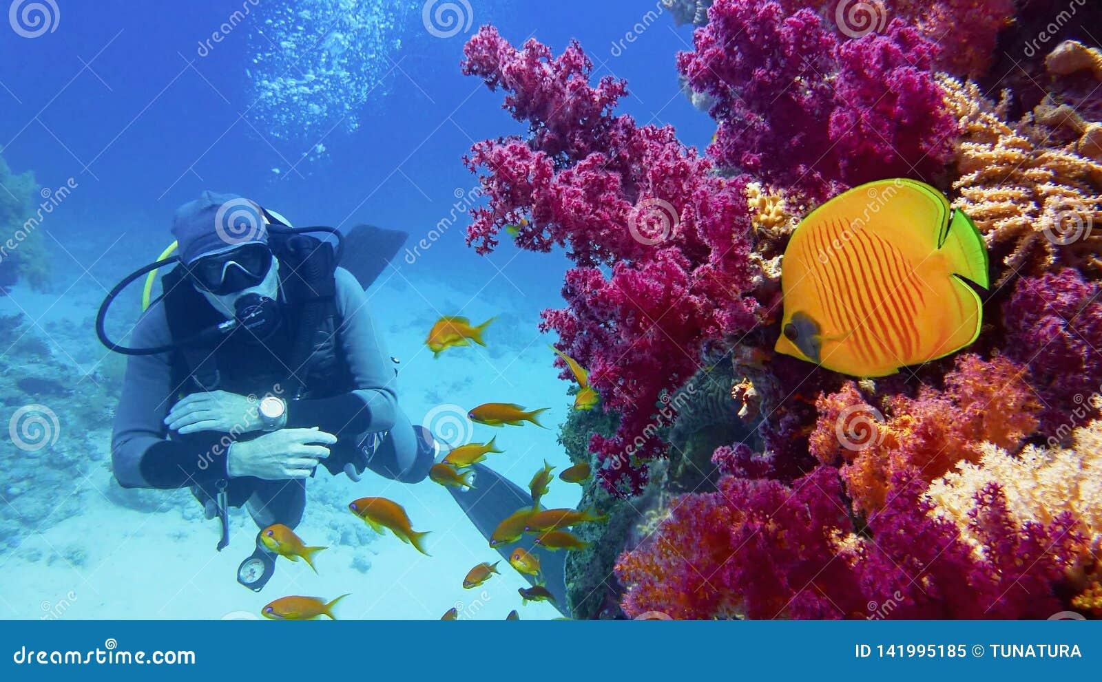 Buceador del hombre cerca del arrecife de coral con los corales suaves púrpuras hermosos y los pescados amarillos de la mariposa
