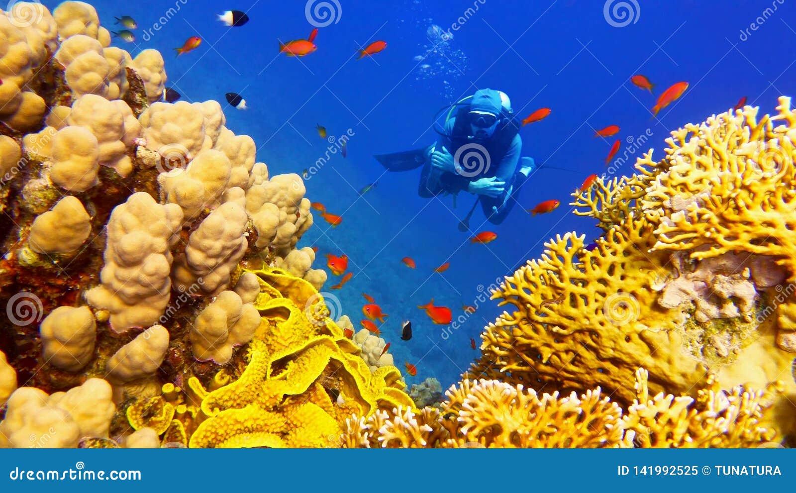 Buceador del hombre debajo del arrecife de coral colorido hermoso