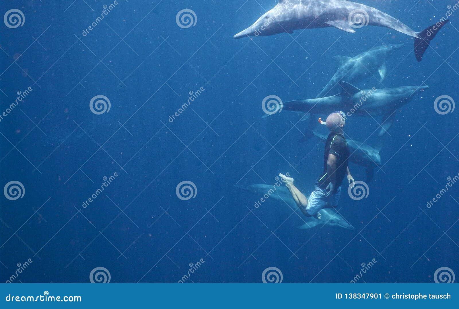 Buceador que disfruta de la presencia de delfínes alrededor de él