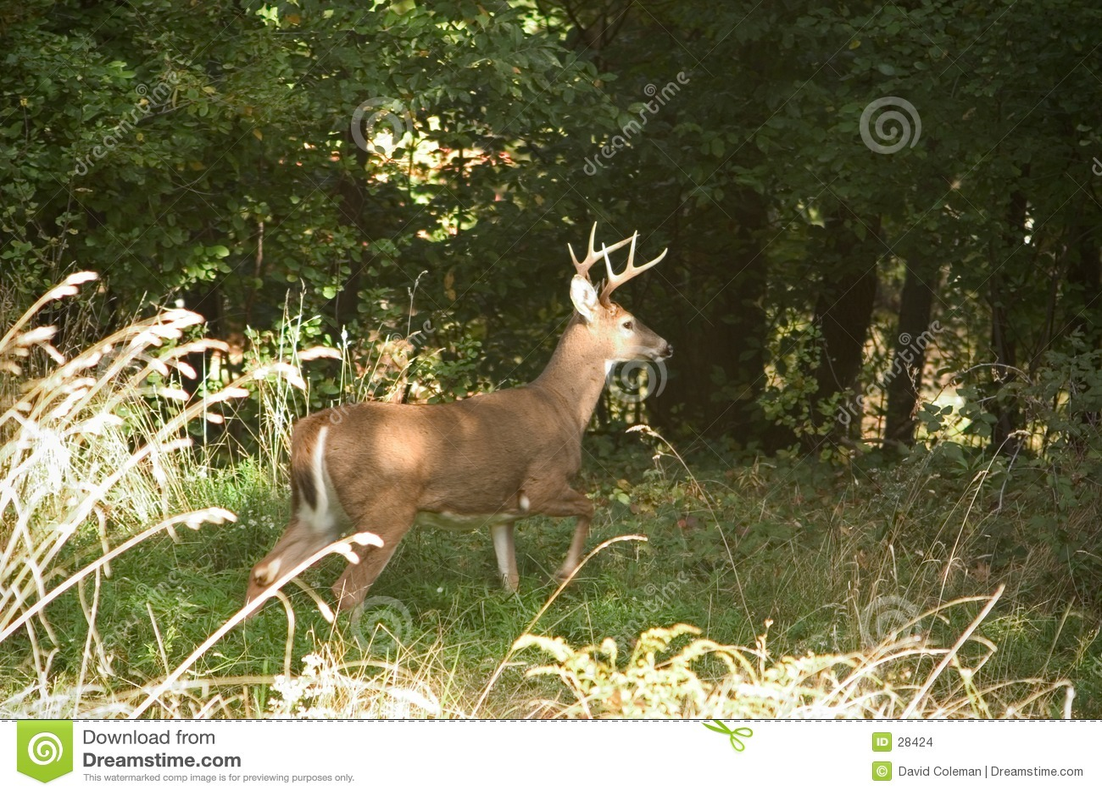 Buck υπερήφανος