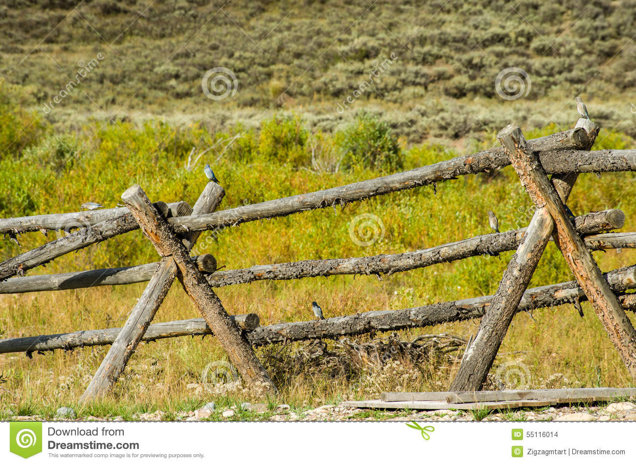 Buck and rail fence in rural area stock photo image