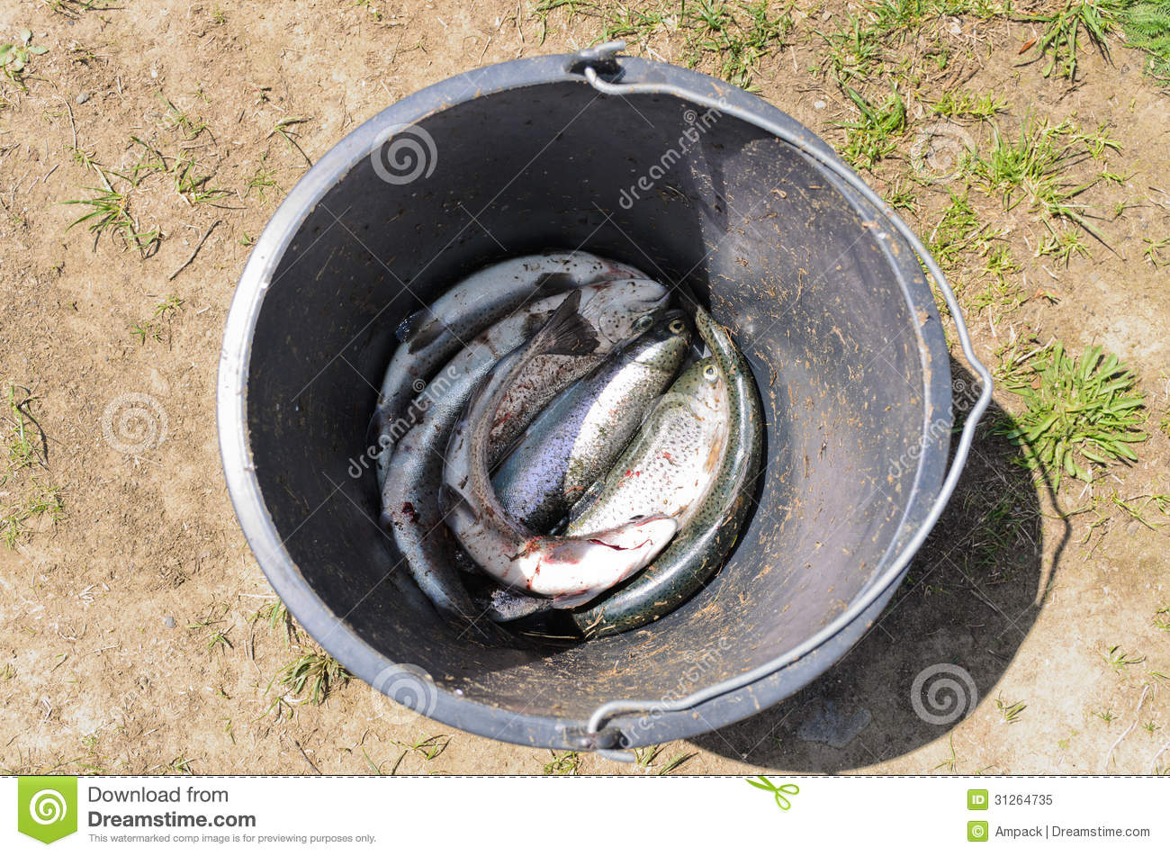 Bucket with freshly caught fish royalty free stock photo for Bucket of fish