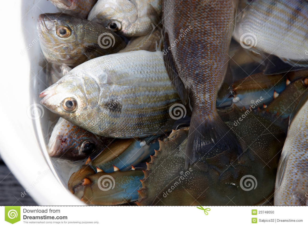 A bucket full of fish stock photo image 23748050 for Bucket of fish