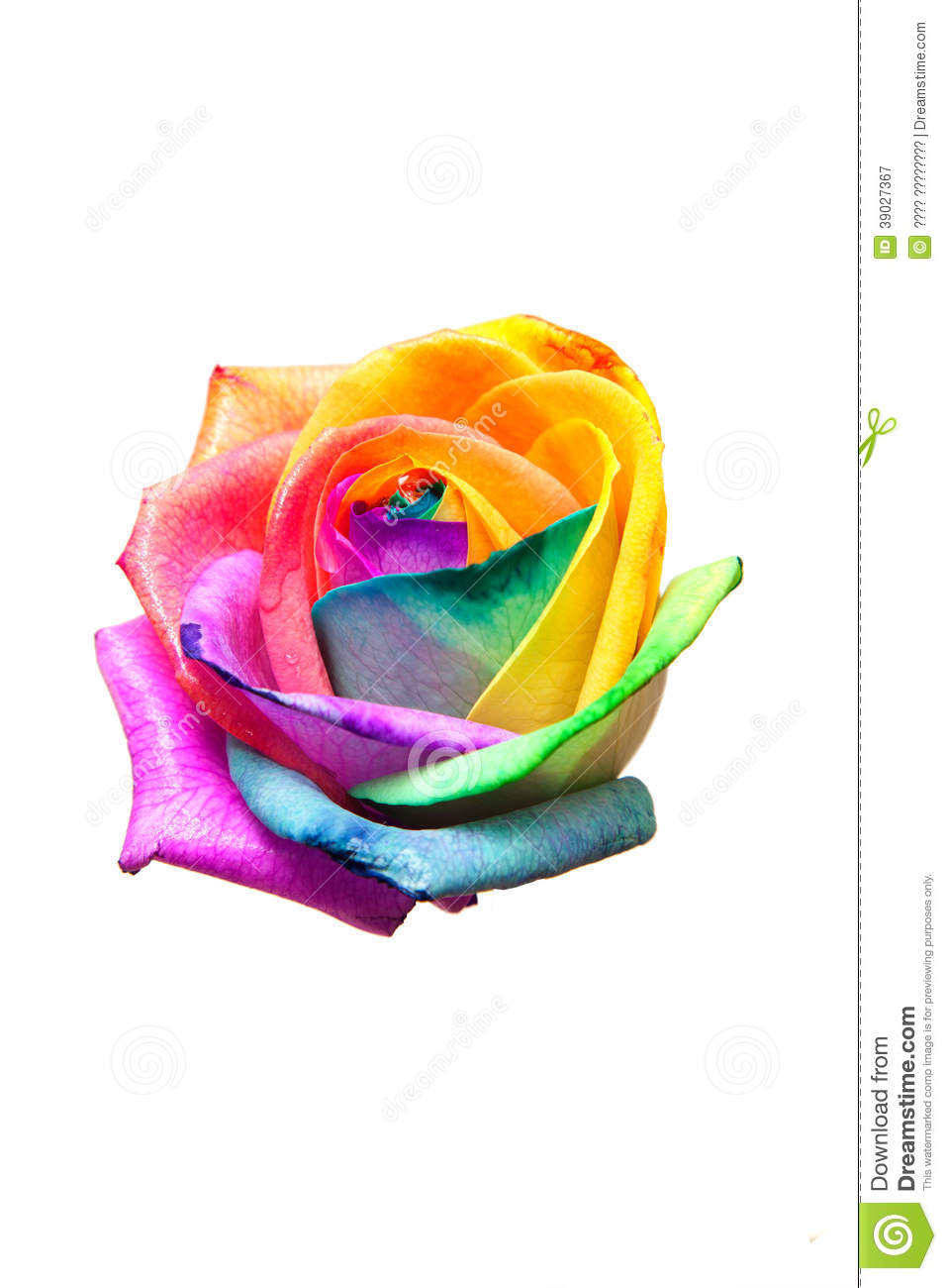 no rainbow no roses Read no rainbow without rain from the story the little street girl (book one) by myladyofstories (lj pierce) with 284 reads series1, doctorwho, rosetyler the.
