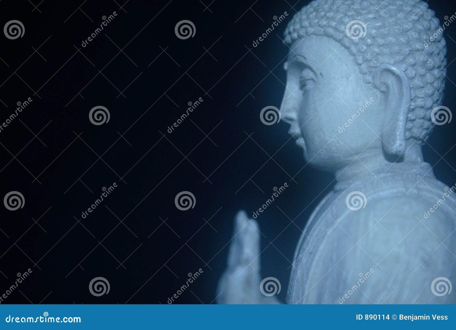 Budda profil białej