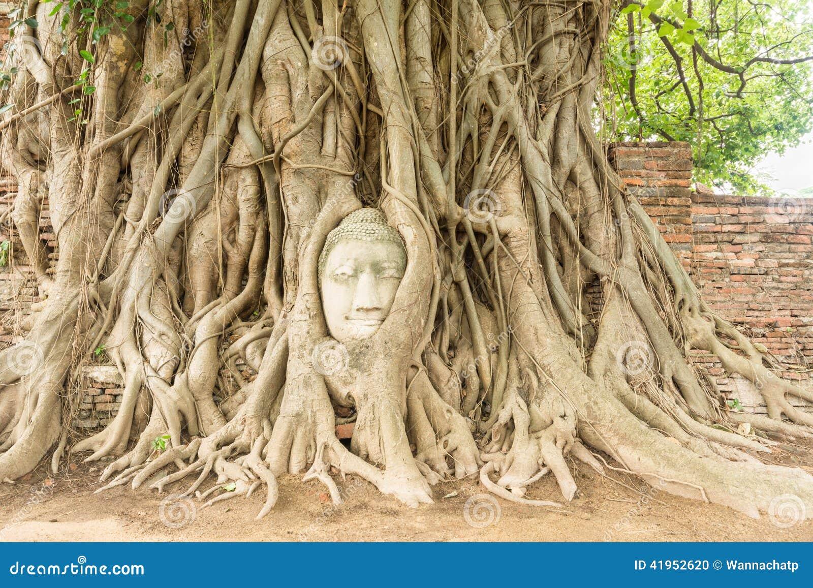 Buddha głowa w Bo drzewa korzeniu (UNESCO światowe dziedzictwo)