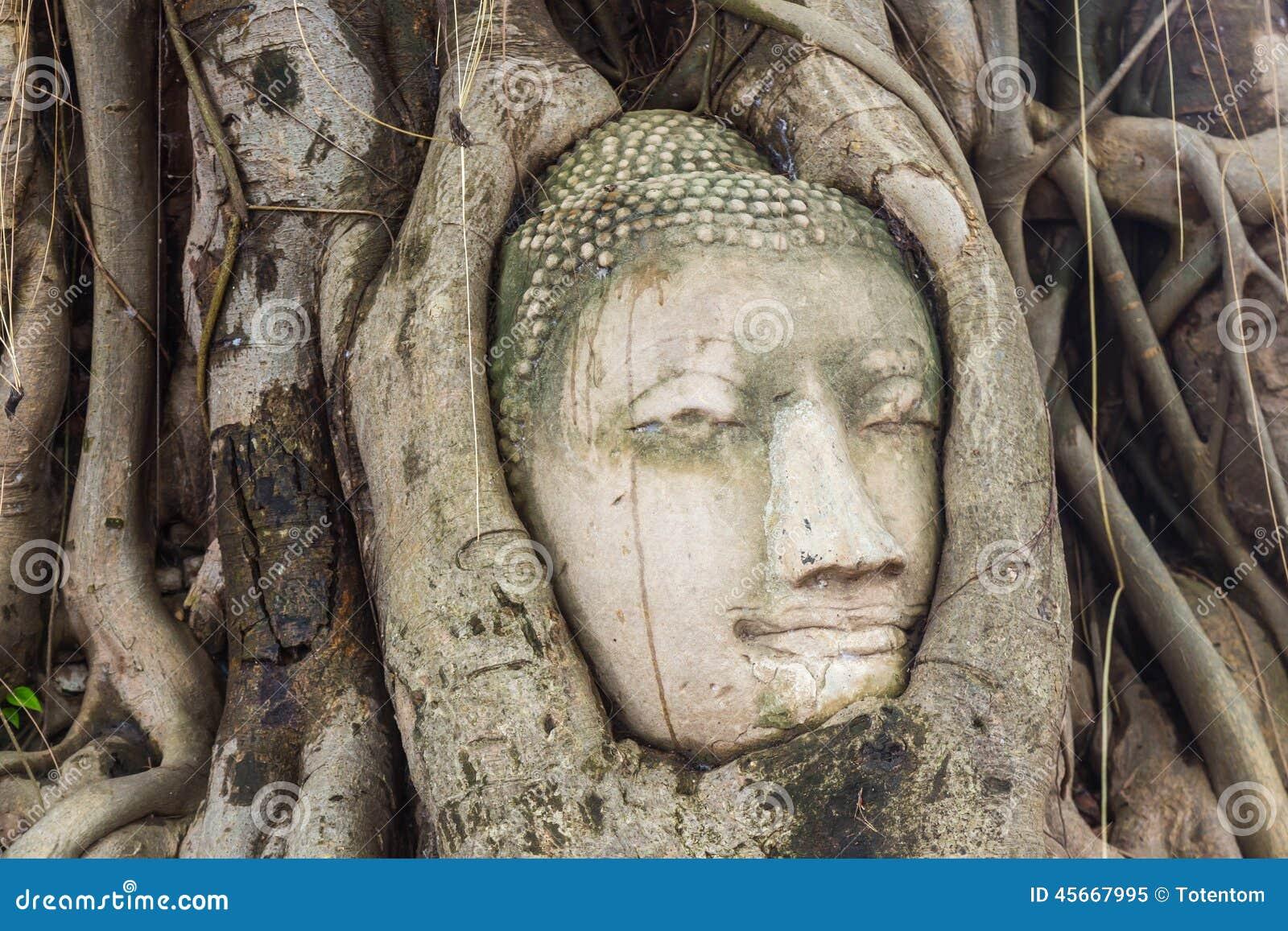 Buddha kierowniczy obramowany w drzewie zakorzenia przy świątynią Wat Mahatat mnie