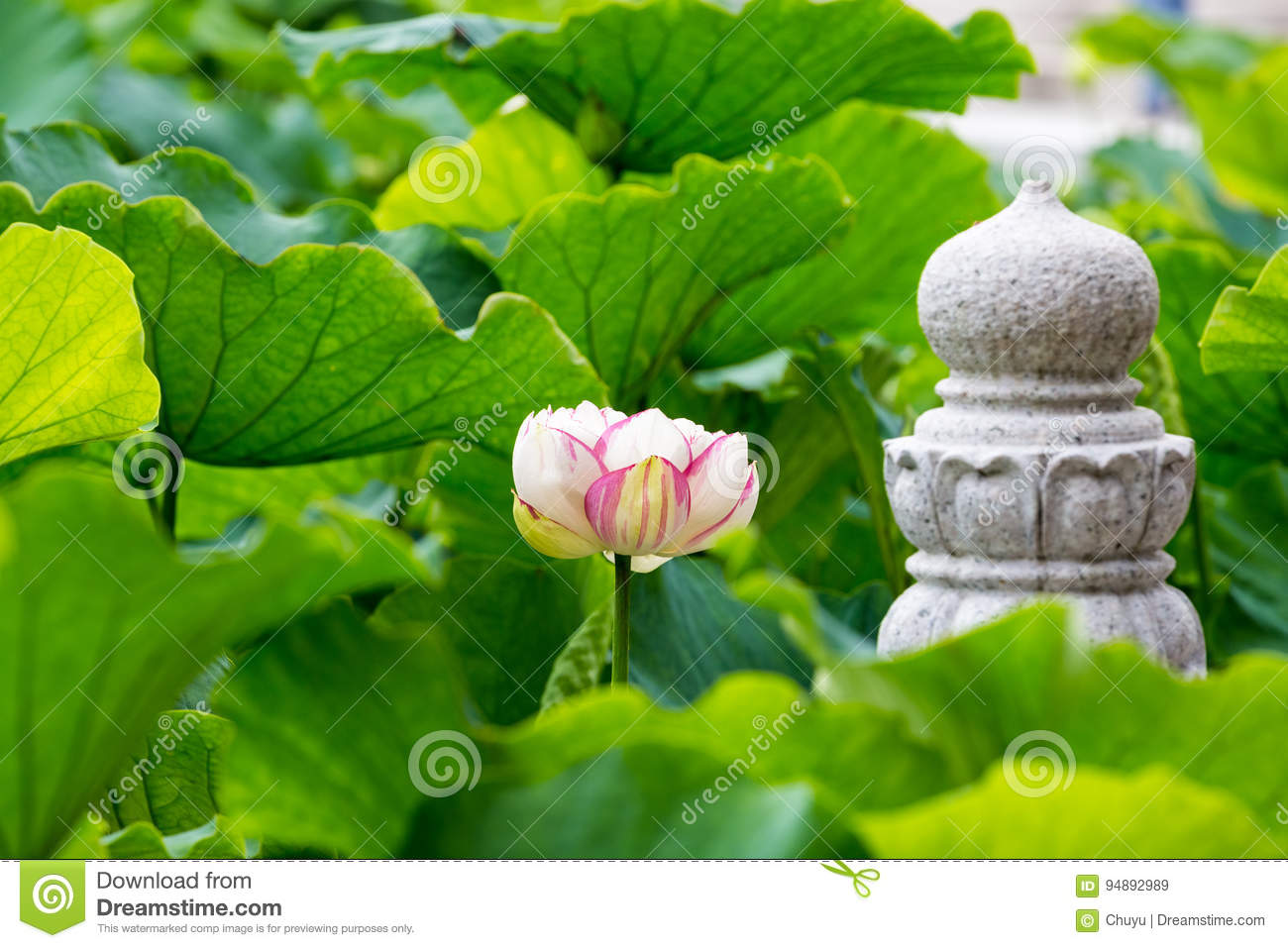 Buddha lotus flower stock image image of lotus petal 94892989 buddha lotus flower izmirmasajfo