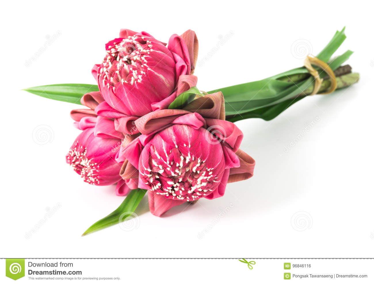 Buddhist pink lotus flower offerings to gods stock photo image of download buddhist pink lotus flower offerings to gods stock photo image of religion offering mightylinksfo