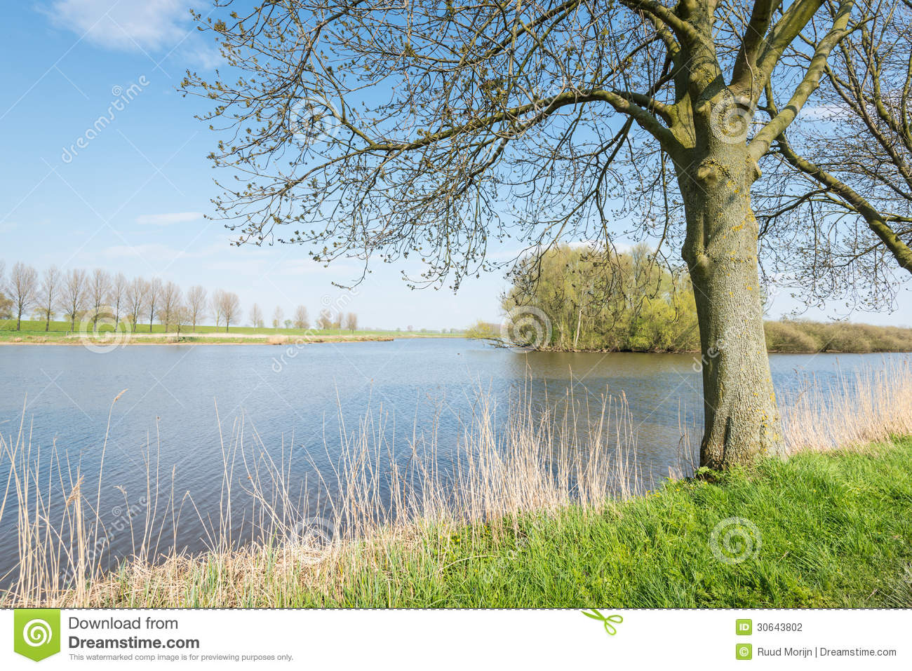 Budding trees along a lake in springtime stock photo for Small natural pond